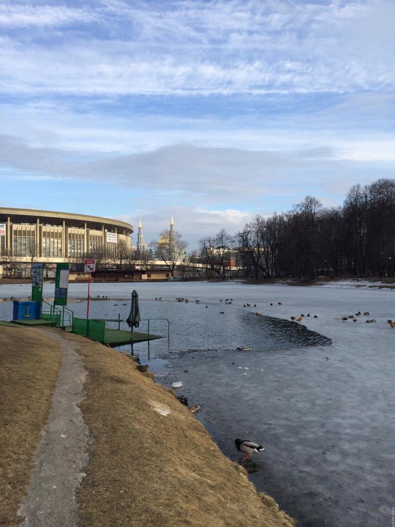 Екатерининский парк - Утки 29-30 марта
